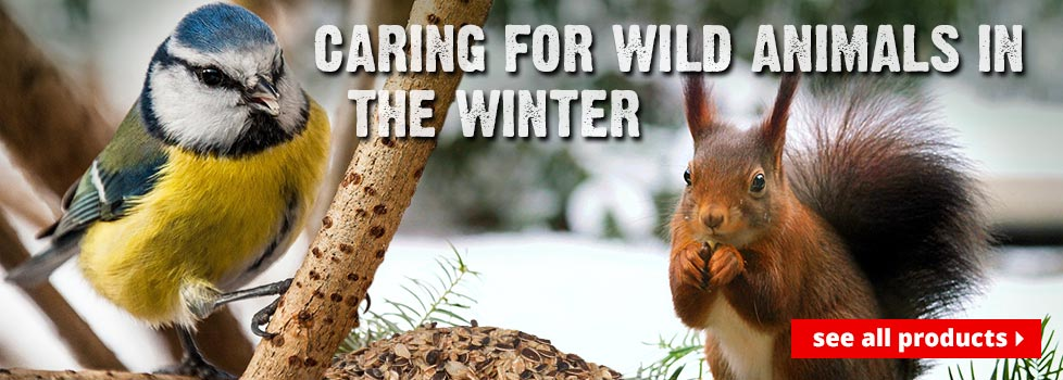Caring for wild animals in the winter